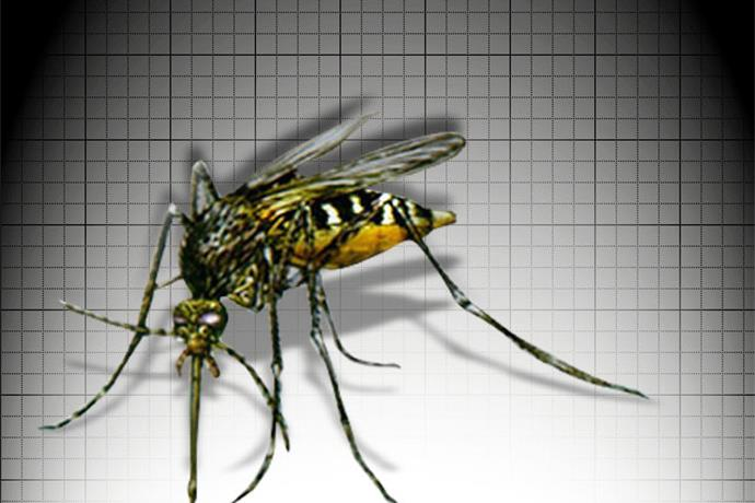 Isaac Could Help Tame Mosquito Population_-2323578031577675797