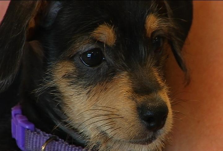 Washington County Animal Shelter funding