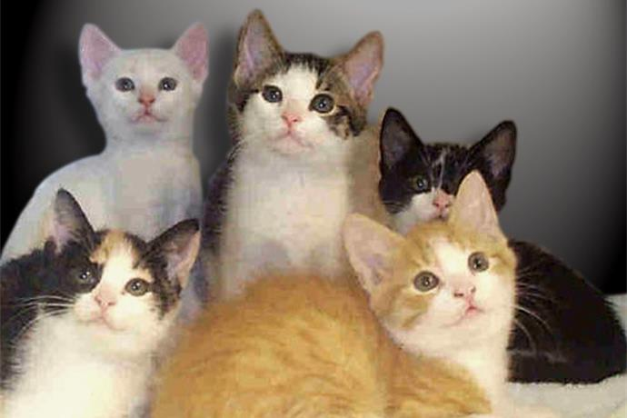 Lowell Animal Shelter Offers Free Cats & Kittens on July 23_3814586508534369421