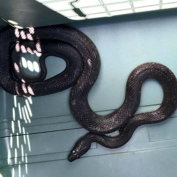snake_1465517972534.jpg