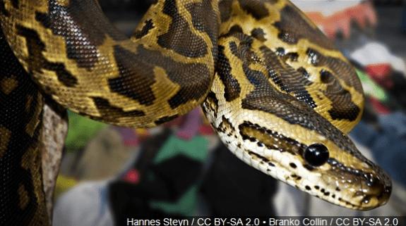 python_1491320720506.png