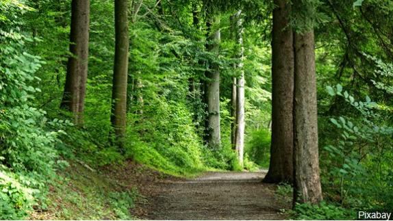 Fayetteville named a 2020 Tree City USA