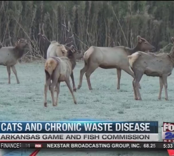 Arkansas_Game_and_Fish_Commission__Fox_2_0_20180320230348
