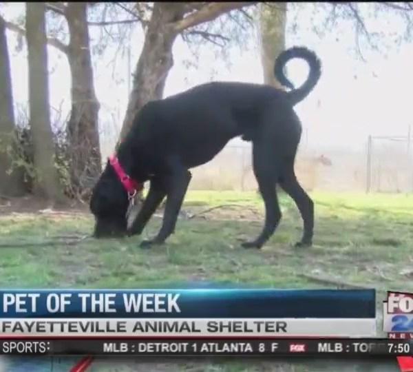 Pet_of_the_Week__FOX__0_20180316154400
