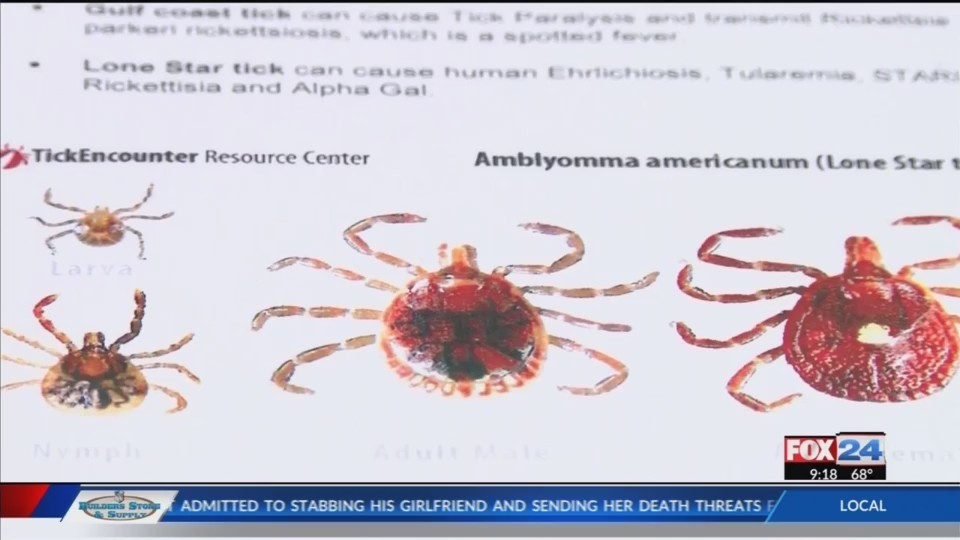 Rogers Woman Bit By Tick, Causes Mammal Meat Allergy