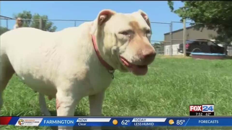 Pet_of_the_Week_Miss_Abby_0_20180622130440