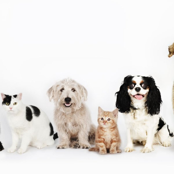 dogs-cats-GettyImages-107072782_20180608033024-159532
