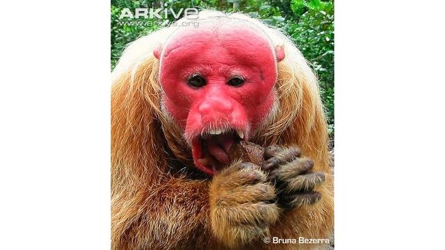 peculiar primates_1532974065871.jpg.jpg