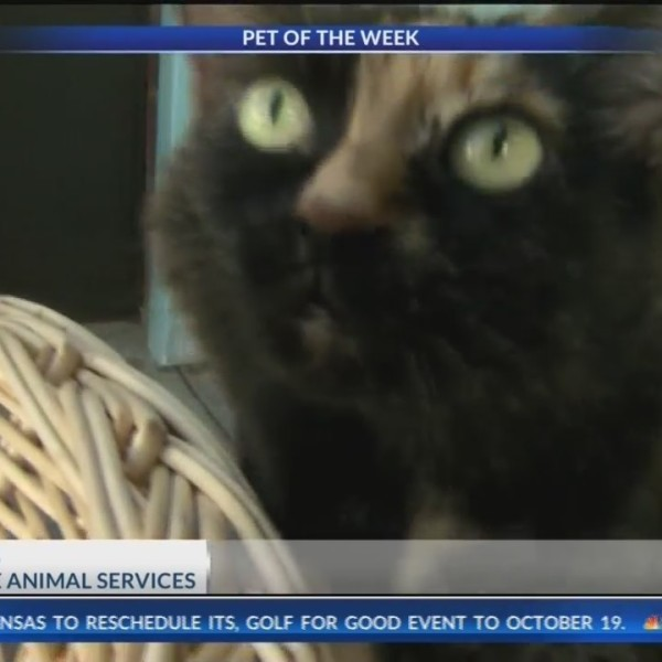 Pet_of_the_Week__Princess__BetterWithPet_0_20180921131431