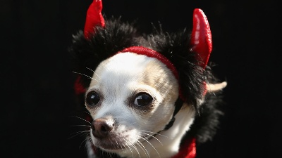 Halloween-pet-costumes---blurb_20161021163757-159532