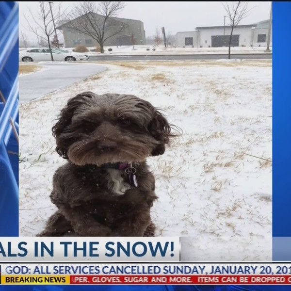 ANIMALS_IN_THE_SNOW____KNWA_0_20190120043449