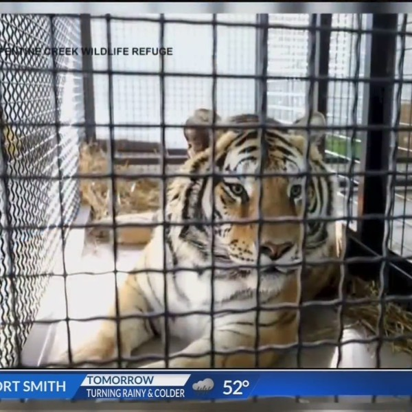 Tiger_Rescued_by_Turpentine_Creek_Dies_0_20190122134802