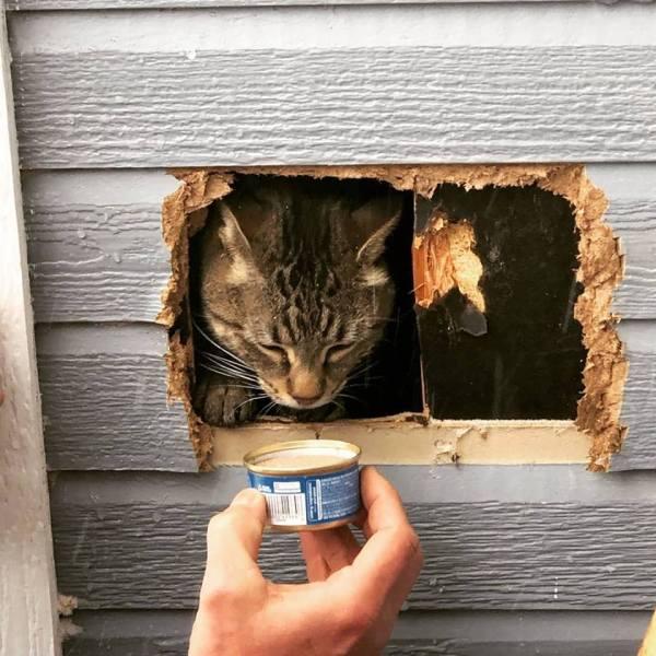 Trapped Cat_1548365622836.jpg.jpg