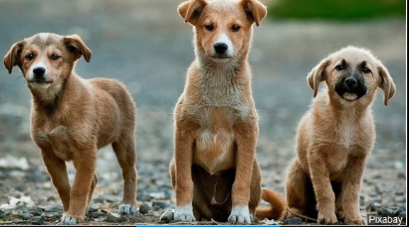 Dogs_1548006958398.PNG