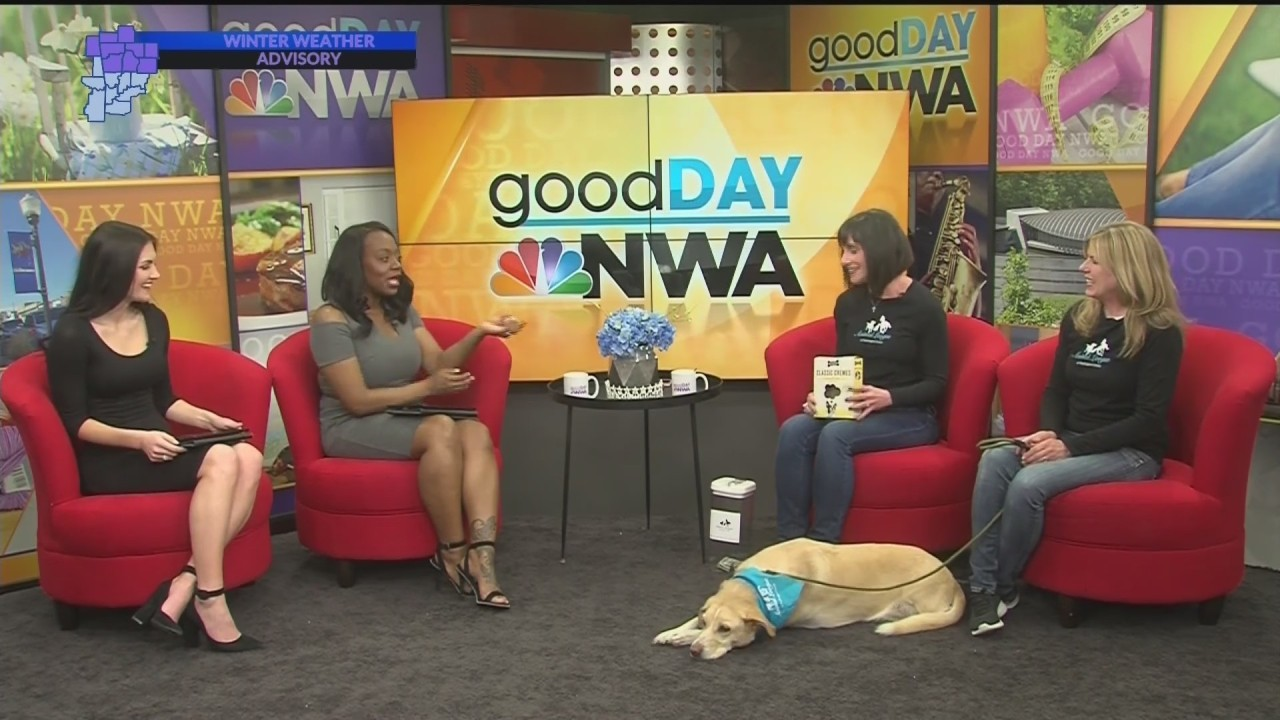 Good Day Nwa Animal League Of Washington County Dog Biscuit Challenge