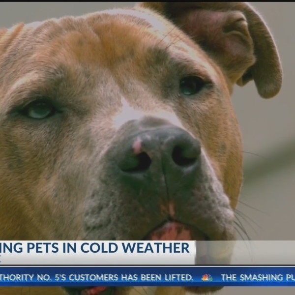 Fayetteville Animal Shelter Urges Protecting Your Furry Friends in Freezing Temperatures (KNWA)