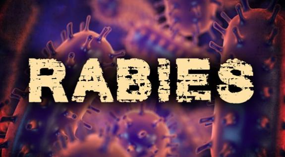 Rabies_1551648312642.PNG