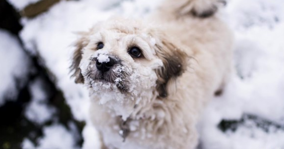 Snow_1551641433055.PNG