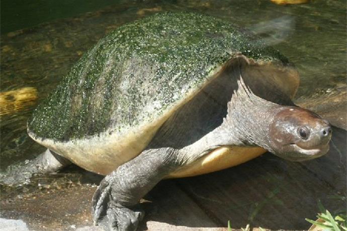 Tues., June 23_ _I Like Turtles__-9031218083007148323