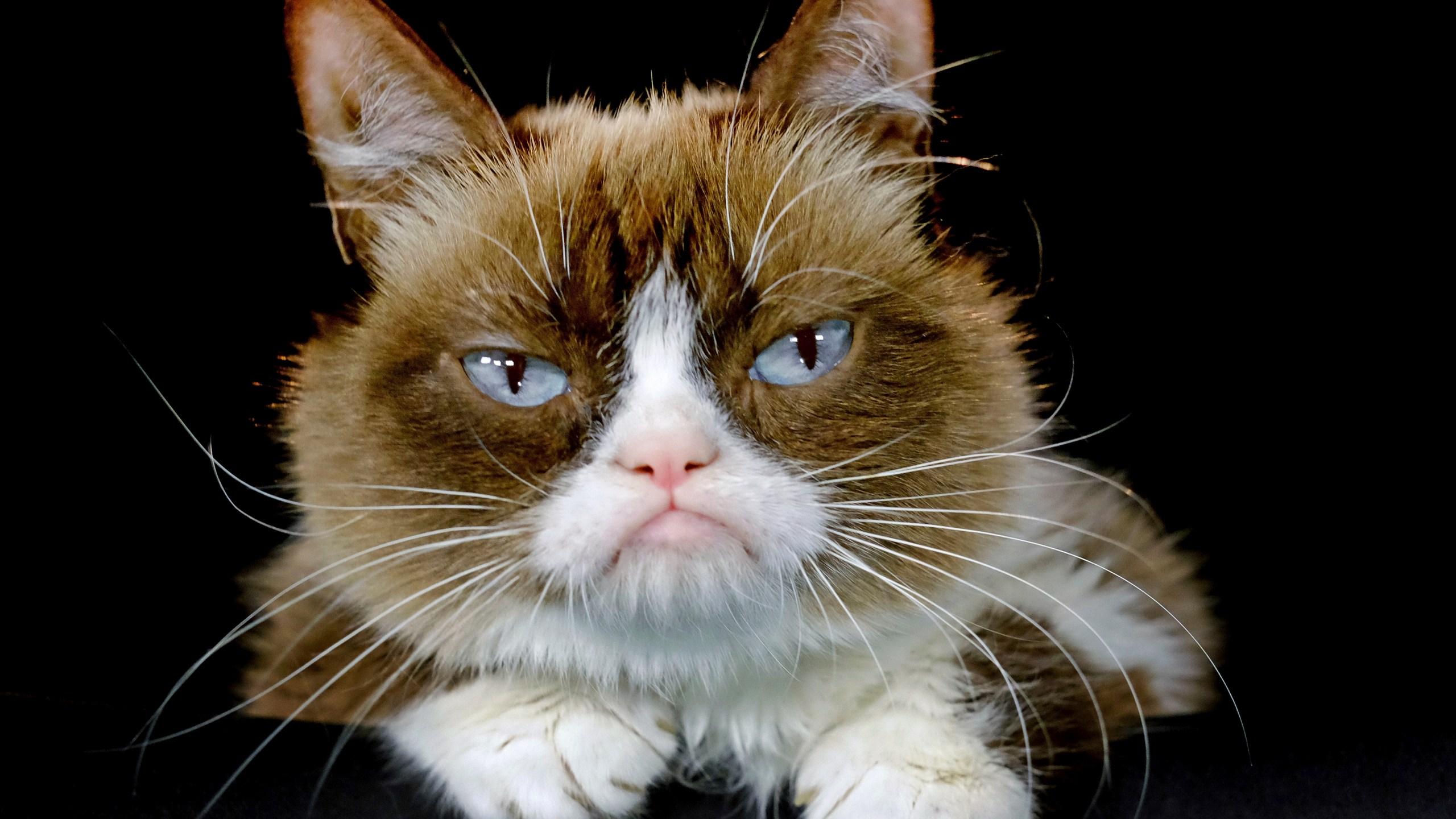 Grumpy_Cat_Death_23718-159532.jpg76700622