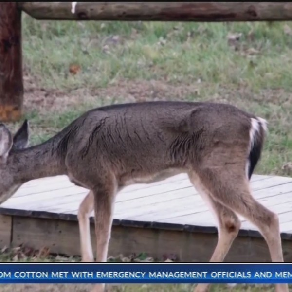 Newton, Carroll and Boone counties have highest number of positive CWD samples in state (KNWA)