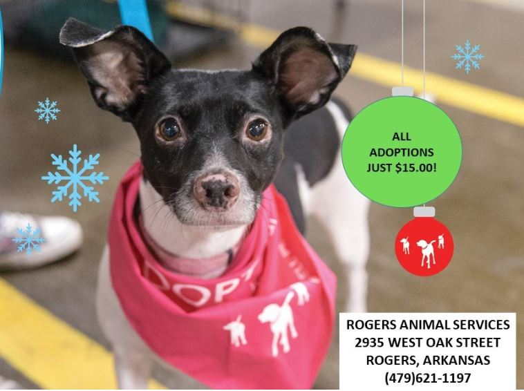 Rogers Animal Services Participating In Empty The Shelters Event Knwa Fox24