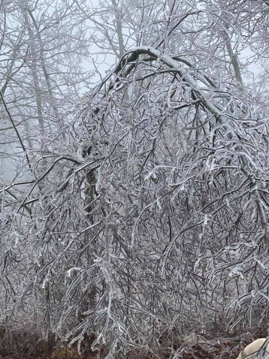 This image has an empty alt attribute; its file name is VillaFriesen_IceTrees_FallsvilleNewtonCo_01-23-20.jpg